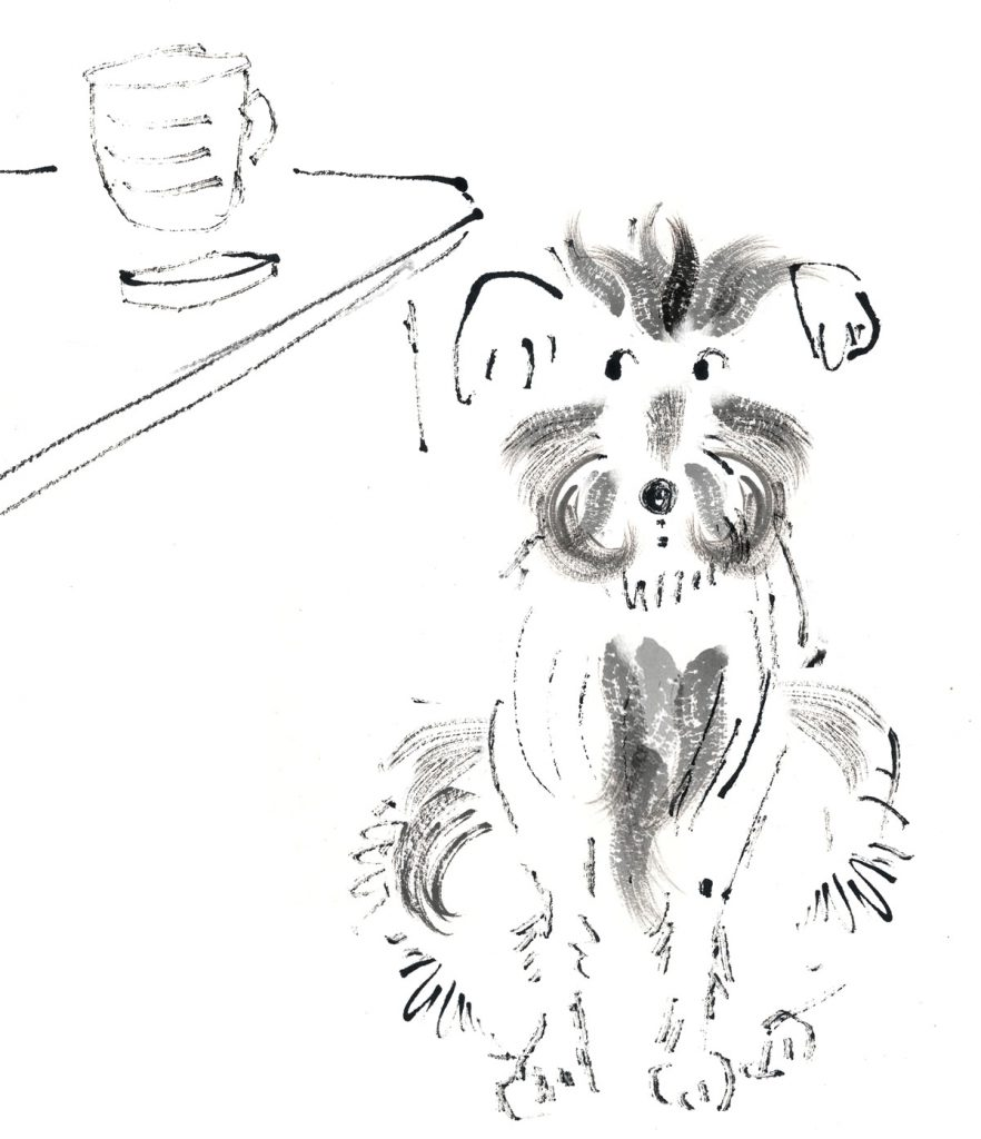 Dog watching a biscuit - picture book illustration