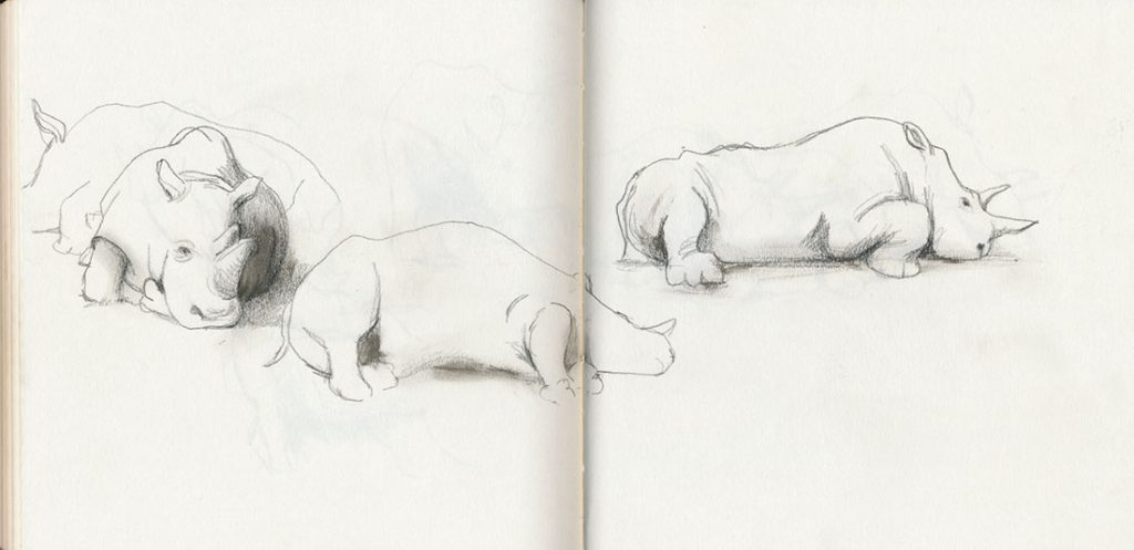 Sketchbook rhinos