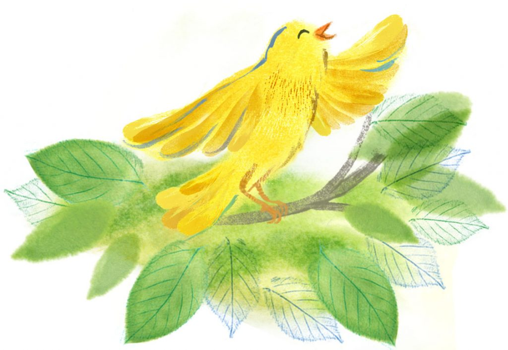 Vignette of canary singing in a tree