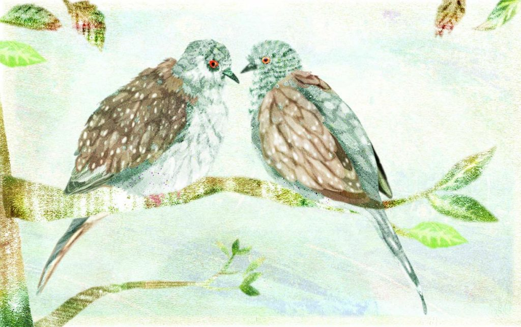 Two Diamond Doves sitting on a branch together