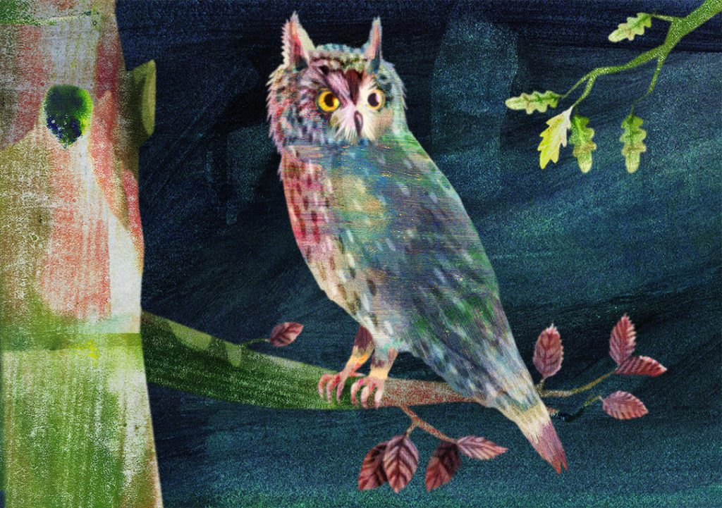 Long Eared Owl sits on tree at night