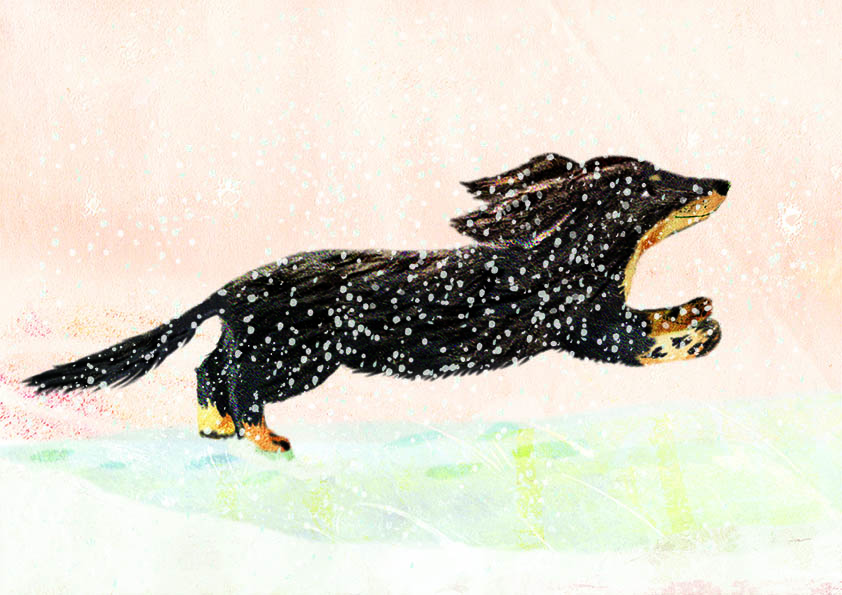 A long-haired, black and tan dachshund running in the snow against a pink sky.